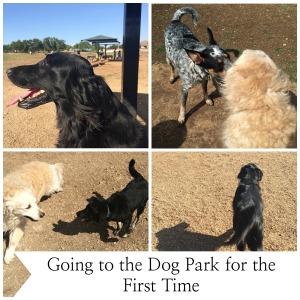 dog park final