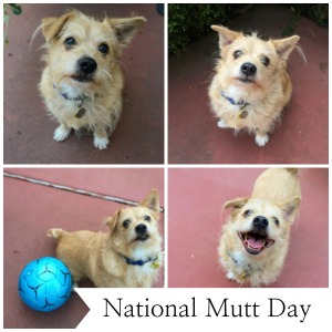 national mutt day collage