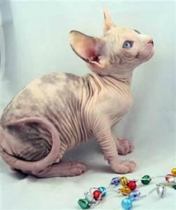 pets frozen kitten--842854835_v2.grid-4x2