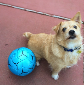 tahoe soccer ball