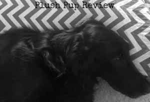 plush pup review bandw