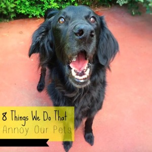 8 thing we do that annoy our pets picture