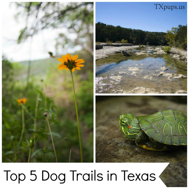 top 5 dog trails in tx