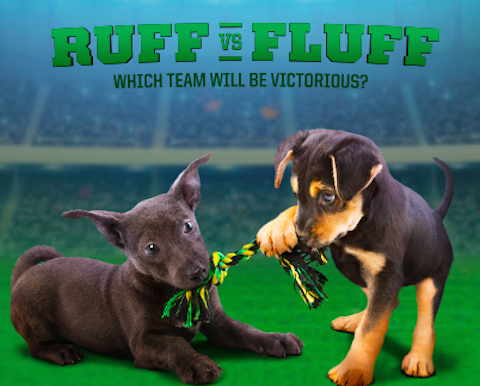 puppy-bowl-animal-planet-1-22-15